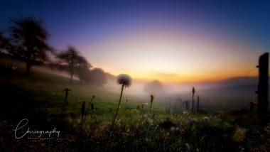 Nebelschwaden über einer morgendlichen Herbstwiese mit Morgentau