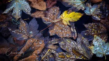 Morgentau auf Herbstlaub