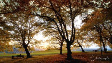 Sonnenstrahlen zwischen herbstlichen Bäumen am See