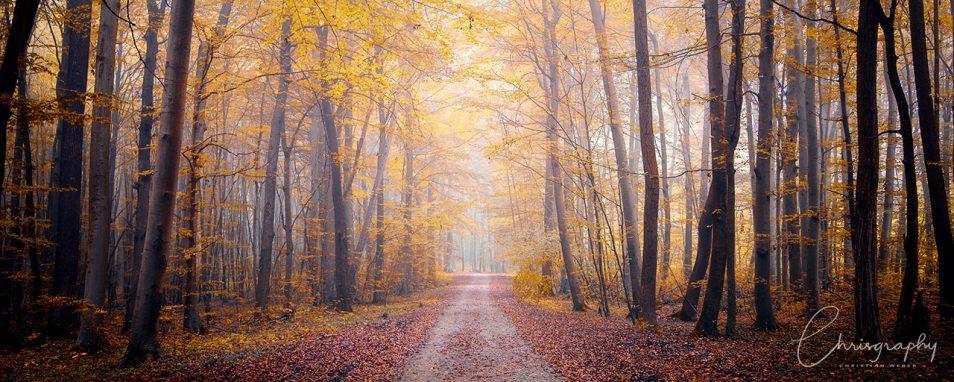 Ein einsamer Waldweg im Herbst mit roten Blättern auf dem Boden und gelben Blättern an den Bäumen