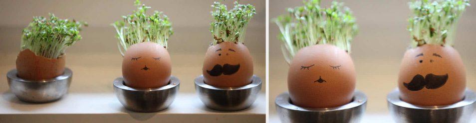 Lustige Eier mit Gesicht, aus denen Kresse wächst