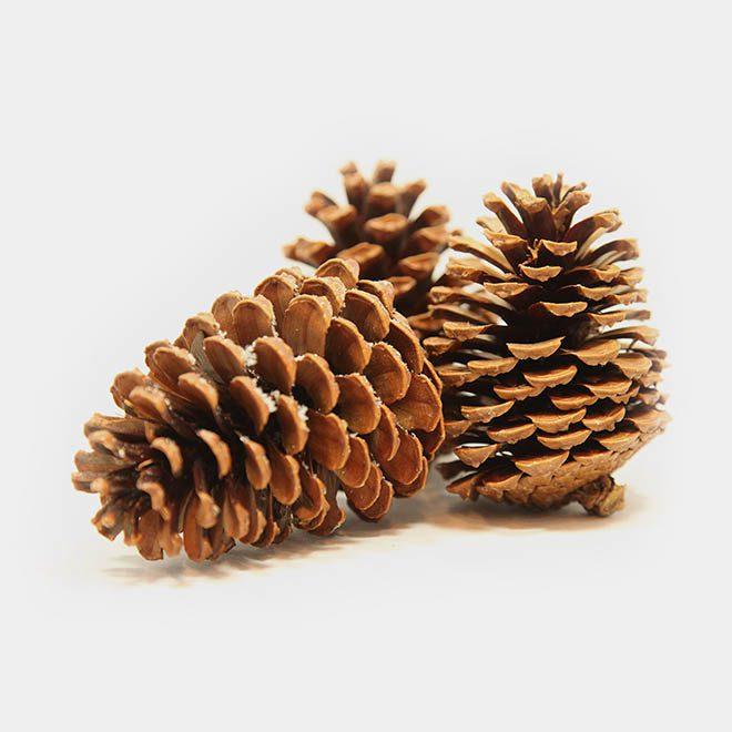 """Weihnachtsbaum-Zapfen """"natur Pinien groß"""""""