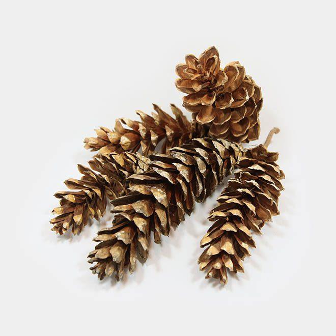"""Weihnachtsbaum-Zapfen """"natur Kiefer lang"""""""