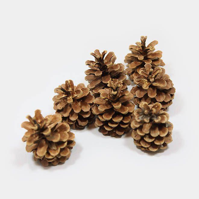 """Weihnachtsbaum-Zapfen """"natur Kiefer normal"""""""